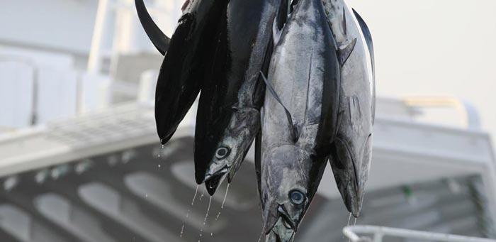 eroski-pescado