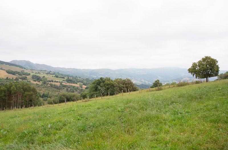 Leche local Navarra