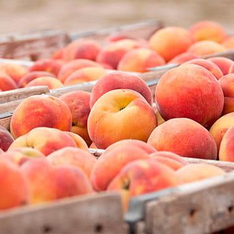Fruta, Reyno Gourmet