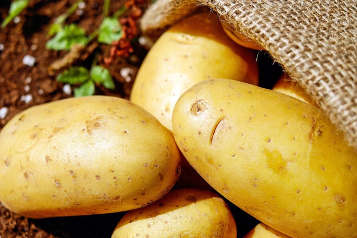 Patata de Álava certificada